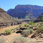 Grand Canyon by Jennifer Heseltine