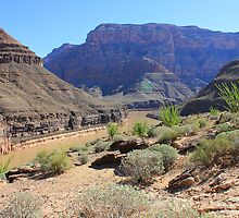 Grand Canyon by Jennifer Heseltine