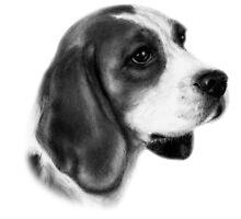 Beagle by Danguole Serstinskaja