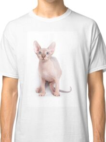 Sphinx kitten with blue eyes Classic T-Shirt