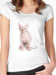Sphinx kitten with blue eyes Women's Fitted Scoop T-Shirt