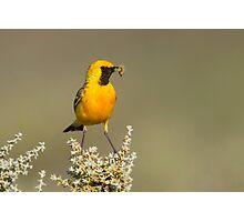 Orange Chat Photographic Print