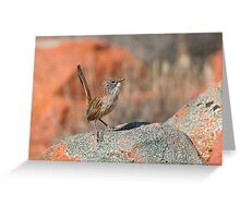 Short-tailed Grasswren - Mt Ive, South Australia Greeting Card