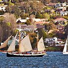 Tall SHips Festival - Tecla makes her way down the Derwent by Odille Esmonde-Morgan