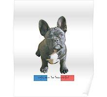 BEAUTIFUL FRENCH BULLDOG Poster