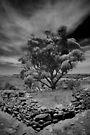 Hampton Tree by Penny Kittel