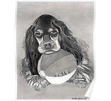 Cocker Spaniel Dog Portrait Poster