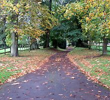 the drive looking very autumnal by margaret hanks