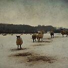 Winter Sheep by Sarah Couzens