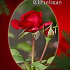 Merry Christmas Greeting Card - Red Roses by MotherNature