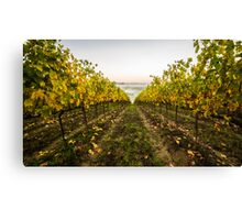 Autumn Vineyard Canvas Print
