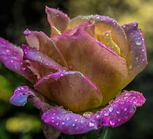 After the Rain by Cynthia Broomfield