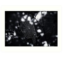 Overnight Sensation - Spider Web Art Print