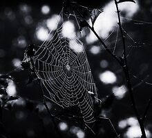 Overnight Sensation - Spider Web by Mike Koenig