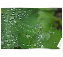 Water droplet leaf? Poster