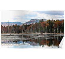 Remote Pond - Beaver Lodge Poster