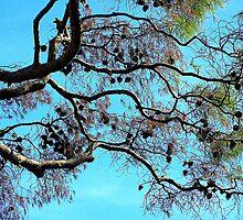 Pine Cones Falling............................Beware by Fara
