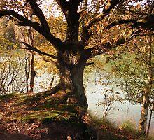 Beautiful Tree by ienemien