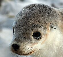 Sea-lion pup 1 by Tessa Manning