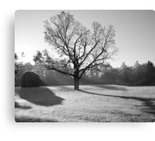 Warming Frost Canvas Print