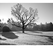 Warming Frost Photographic Print