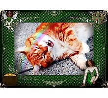 Irish Meows Photographic Print