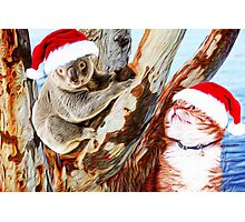 Christmas Down Under Photographic Print