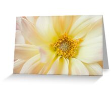 Yellow Dahlia Greeting Card Greeting Card