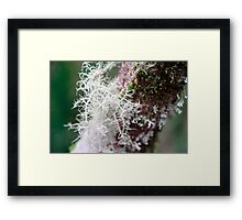 Life Form - II Framed Print
