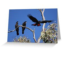 Red-tailed Black Cockatoos Greeting Card