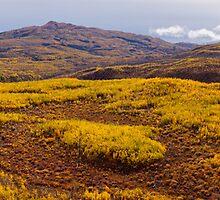 Fall taiga recovering from fire, Fox Lake burn, Yukon Territory, Canada by ImagoBorealis