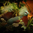 Two Victoria Crowned Pigeons in mystery forest by steppeland
