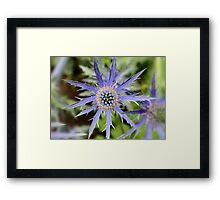 Sea Holly - Blue Thistle Framed Print