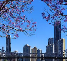 Brisbane Jacaranda by Martin Canning