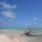 Dream Atoll by Jola Martysz