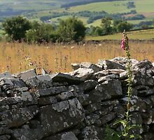 Welsh Dry Stone Wall by Carole Gledhill