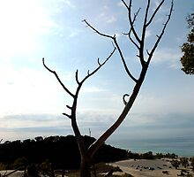 Tree, top of the Dune by Rebekka Reynolds