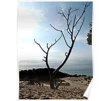 Tree, top of the Dune Poster