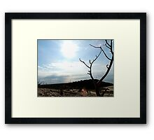 Tree, top of the Dune 2 Framed Print
