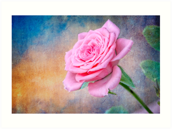 Fall Rose by Bonnie T.  Barry