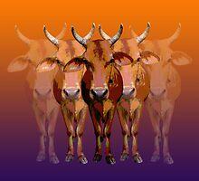 Brahman cow by minjean