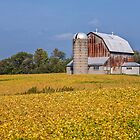 Nearing Harvest Time by PhotosByHealy