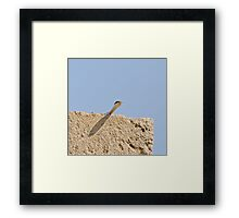 Sand Snake on Wall  in The Gambia Framed Print