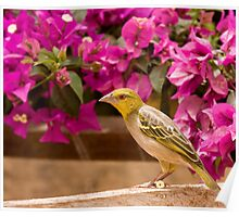 Village Weaver with flower Poster