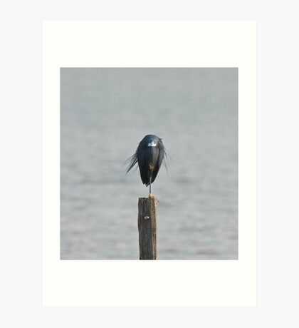 Western Reef Heron on one leg Art Print