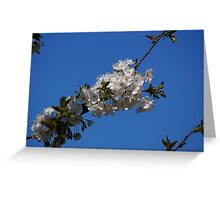 White Spring Blossoms Greeting Card