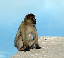 Ape on the edge by Mercedeshall