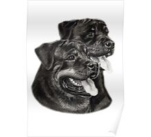 Rottweilers Poster