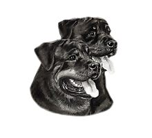 Rottweilers Photographic Print