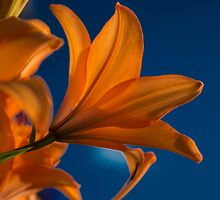 Reaching for the sky! by brenda forsey